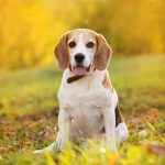 are humidifiers safe for dogs?